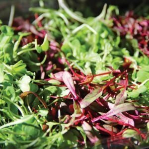 Spicy Salad Blend Microgreens